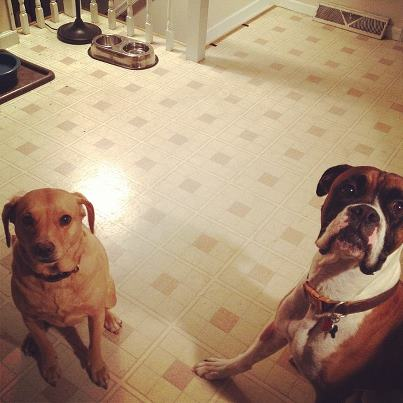 Honey (doing her best Dobby impression) and Macky: BFS (Best Friends Someday) :)